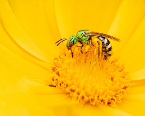 Wasp sitting on flower and eating pollen
