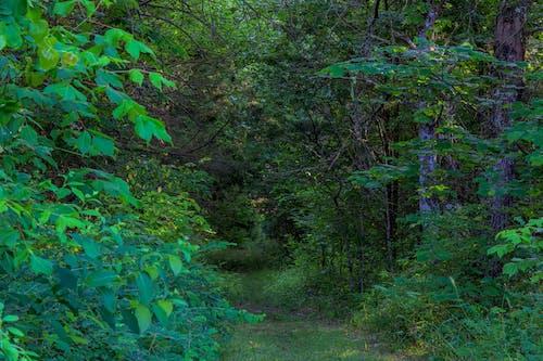 길, 나무, 나뭇잎의 무료 스톡 사진