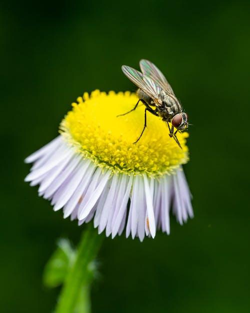 Black fly sitting on flower