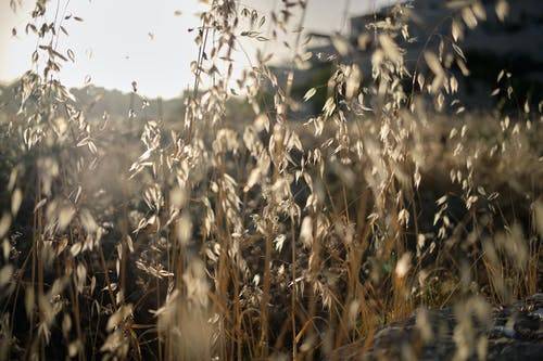 Free stock photo of farm field, wild flowers