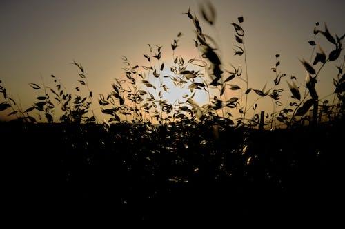 Free stock photo of farm field, sunset, wild flowers