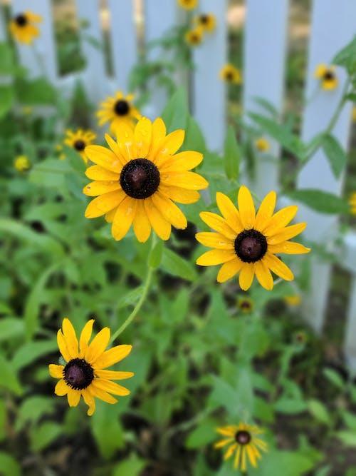 Бесплатное стоковое фото с забор, сад, фехтовать, цветы