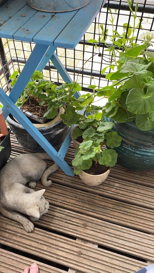 Základová fotografie zdarma na téma blue table, kvetoucí kalhoty, malá zahrada, rostliny