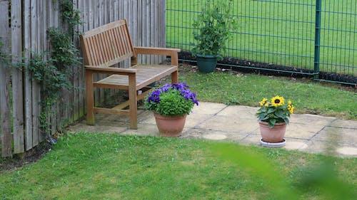 Základová fotografie zdarma na téma rostliny, zahrada, zahradní židle, židle