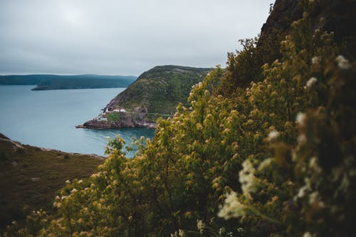 Picturesque scenery of grassy rough coast with herb and bushes on gloomy cloudy day