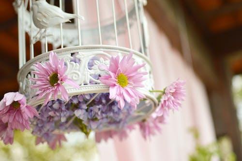 Základová fotografie zdarma na téma dekorace, květiny, ptačí klec