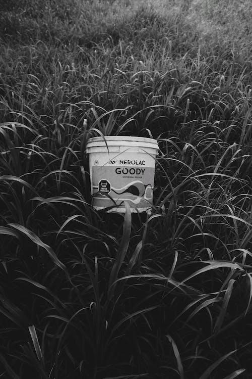 Ilmainen kuvapankkikuva tunnisteilla kori, ruoho