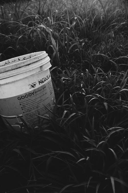 Základová fotografie zdarma na téma kbelík, tráva