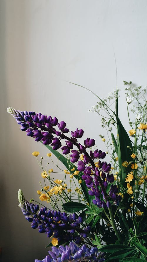 Bunch of fresh bright large leaved lupine arranged with tiny yellow flowers in vase against white wall