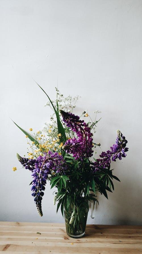 Fresh Lupinus polyphyllus bouquet in vase