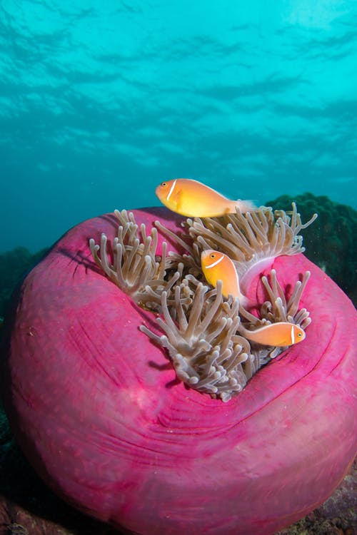 Photo of Fish on Sea Anemone