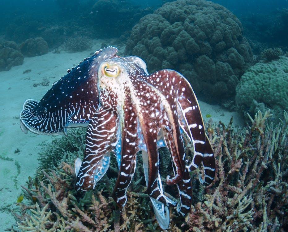 Kostenloses Stock Foto zu baden, fisch, korallen