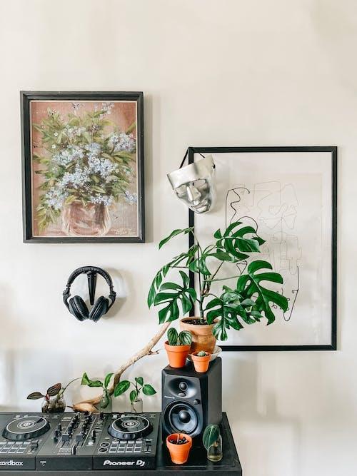 Foto stok gratis alami, alat, Apartemen, batang
