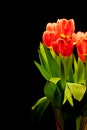flowers, plant, spring