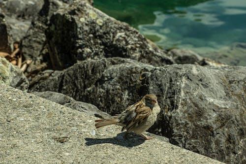 Gratis stockfoto met meer, vogel