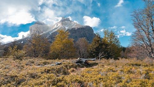 Immagine gratuita di fogliame, montagne giganti, natura, patagonia