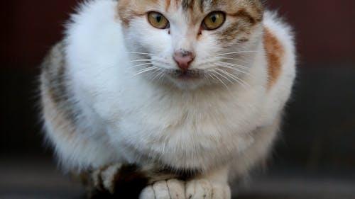 貓 的 免费素材照片