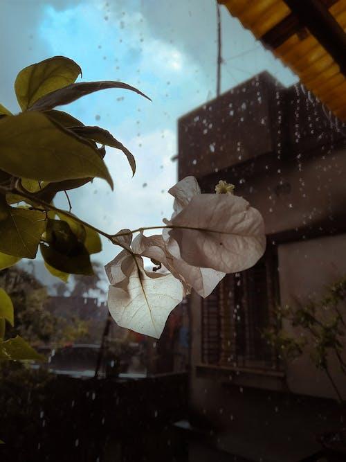 Doğa Ana, güzel çiçek, yağmak, yağmur içeren Ücretsiz stok fotoğraf