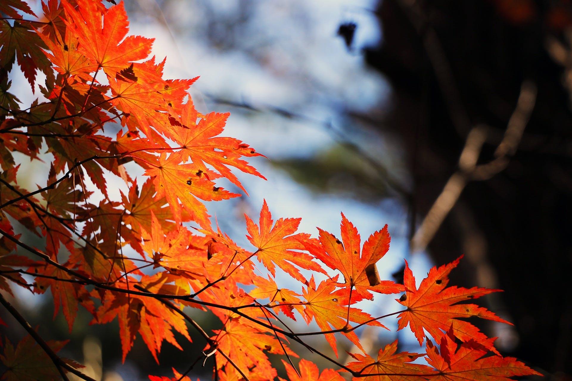 Free stock photo of wood, leaf, leaves, autumn