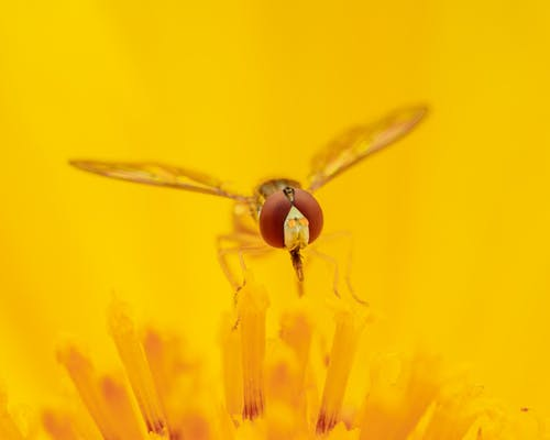 Hoverfly sitting on yellow flower