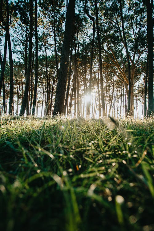 Fotos de stock gratuitas de al aire libre, arboles, bosque