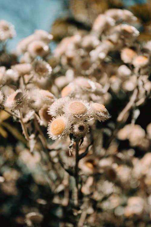 Бесплатное стоковое фото с белые цветы, вертикальный, глубина резкости