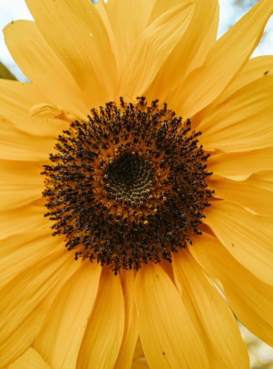Základová fotografie zdarma na téma barva, čerstvý, flóra