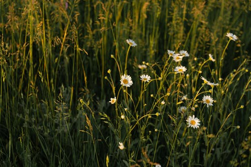 Gratis stockfoto met bloeien, bloeiend, bloem, bloemen
