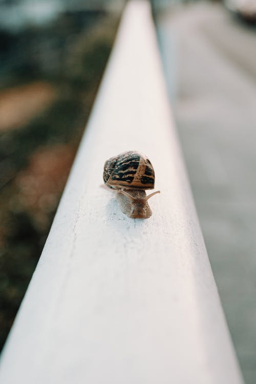 Selective Focus Photo of Snail