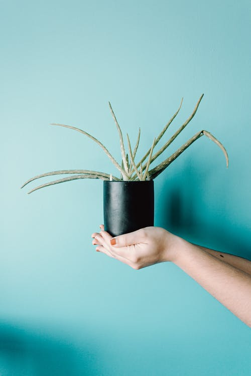 Person Holding Black Pot With Green Plant Against Teal Background
