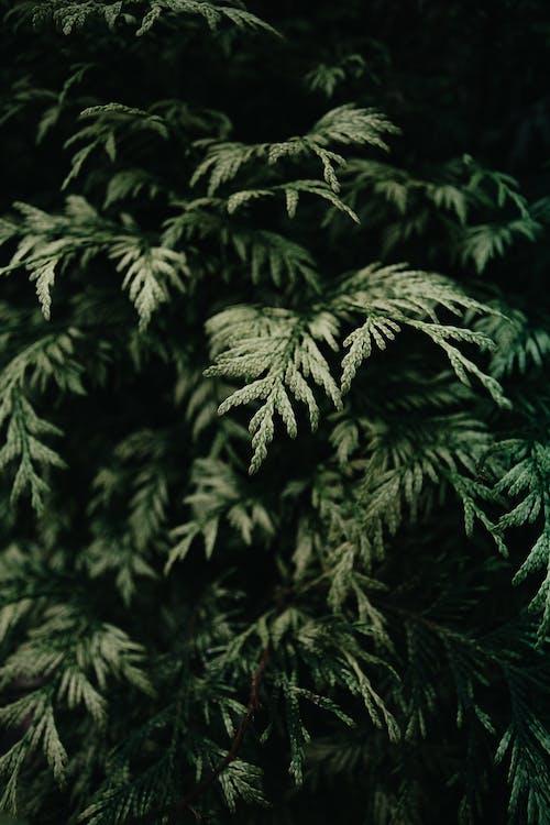 Darmowe zdjęcie z galerii z flora, głębia pola, kolor