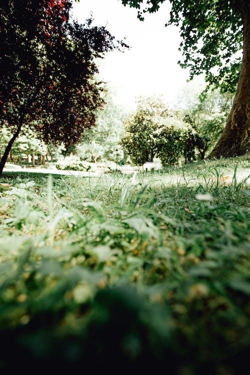 Foto stok gratis alam, bidikan sudut sempit, di luar rumah