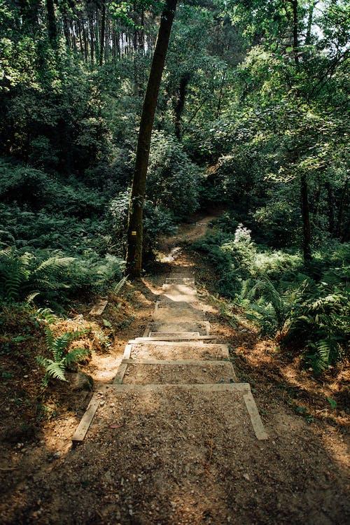 Photos gratuites de arbres, bois, campagne