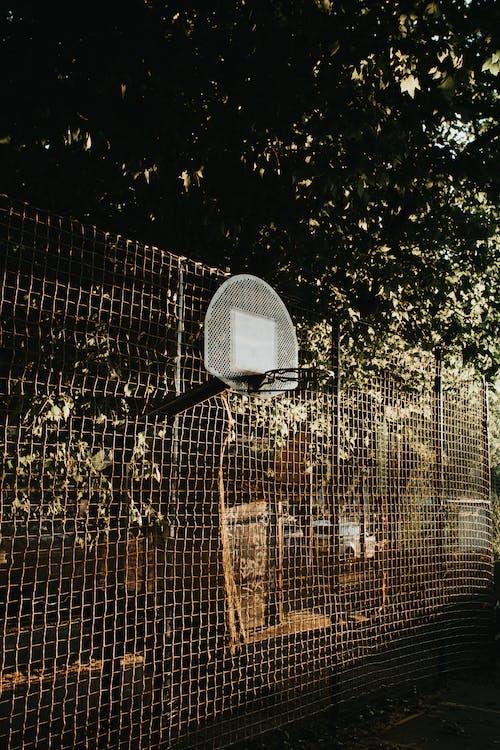 Metal fence with basketball hoop under tree