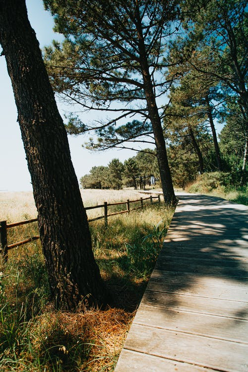 Wooden walkway in countryside at daytime