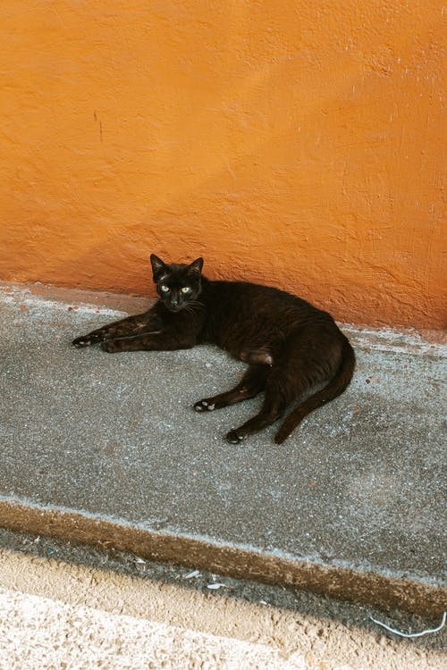 Black Cat Lying on Gray Concrete Floor