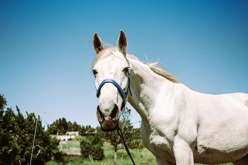 Photo of White Horse
