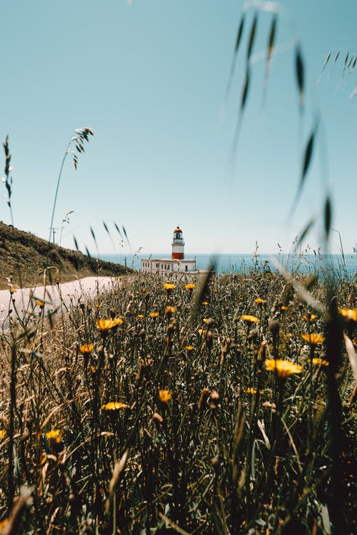 Scenic landscape of grassy coastline