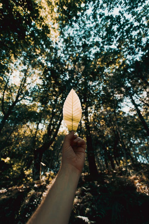 Person holding yellow leaf in hand