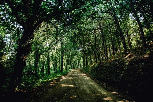 Unpaved Road Between Green Trees