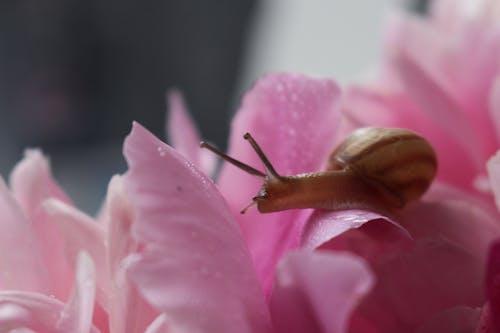 Kostenloses Stock Foto zu blume, blütenblatt, blütenblätter