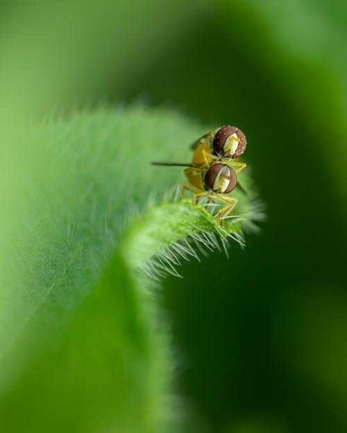 ayrıntı, bitki, bitki örtüsü, bitkibilim içeren Ücretsiz stok fotoğraf