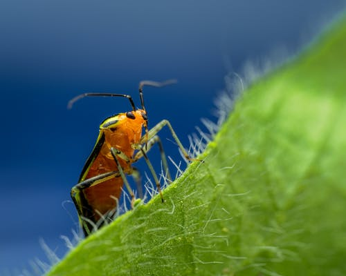 Brown and Black Beetle on Green Leaf in Close Up Photography