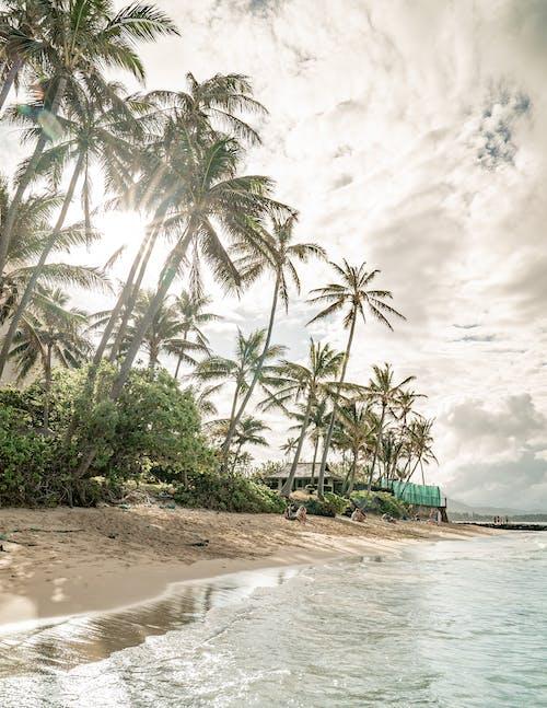 Foto profissional grátis de Adobe Photoshop, água, areia, areia da praia