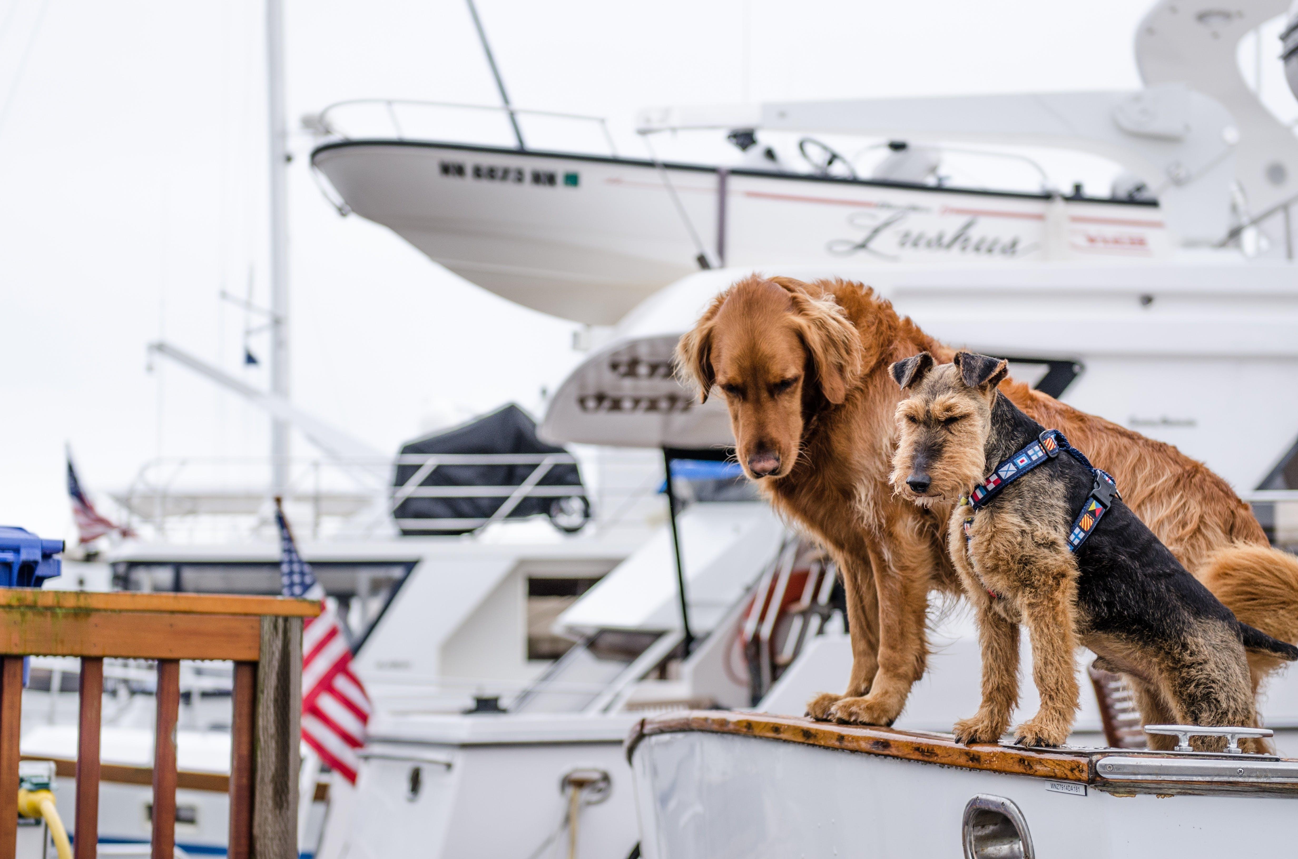 Free stock photo of nature, boats, sailing, animal