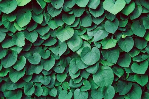 Бесплатное стоковое фото с выращивать, зеленый, куст, природа