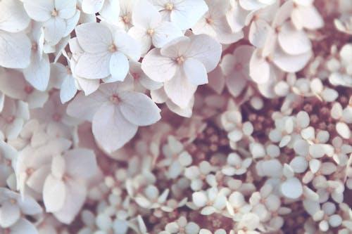 Бесплатное стоковое фото с белый, крошечный, лето, маленький