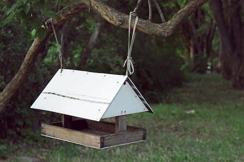Бесплатное стоковое фото с дерево, дикий, домашний, крыша