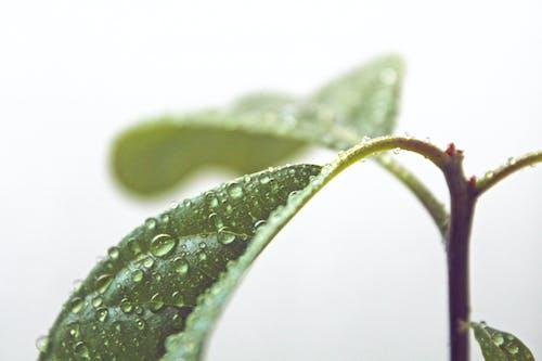 Бесплатное стоковое фото с вода, выращивать, дождь, зеленый