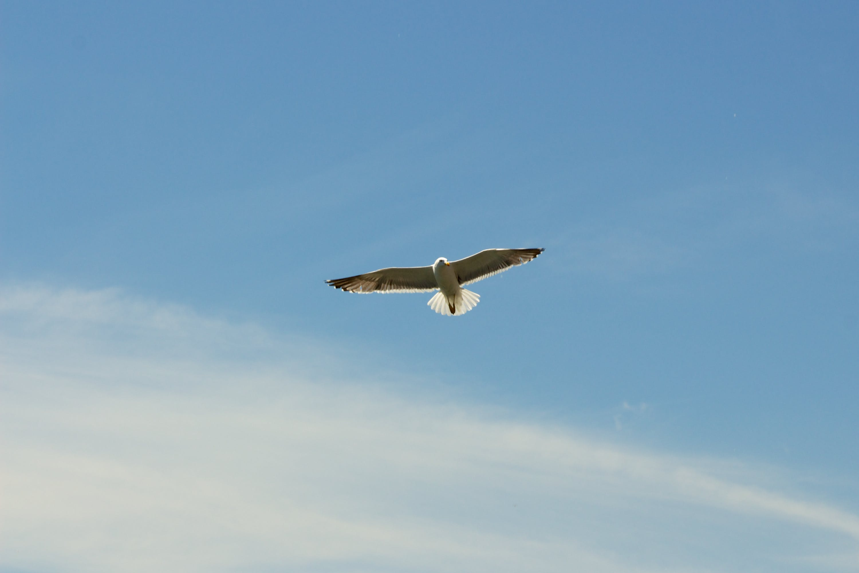Flying White Kite
